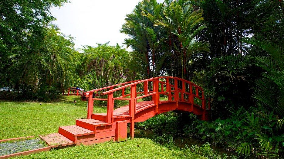 Jardín Botanico de Puerto Rico